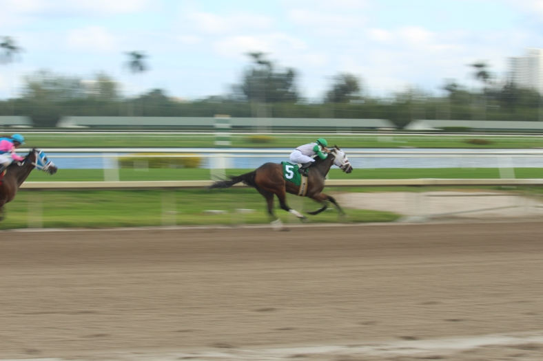 horse-track-1